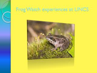 Frog Watch experiences at LINCS