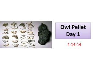 Owl Pellet Day 1