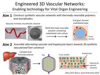 Engineered 3D Vascular Networks:  Enabling technology for Vital Organ Engineering