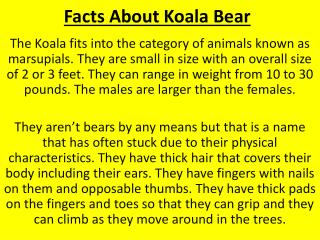 Facts About Koala Bear