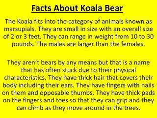 Facts About Koala Bear