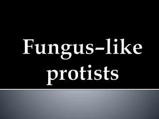 Fungus–like protists