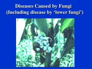 Diseases Caused by Fungi (Including disease by 'lower fungi')