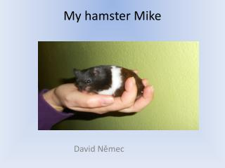 My  hamster Mike