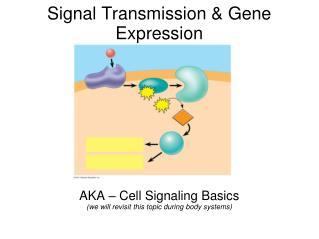 Signal Transmission & Gene Expression