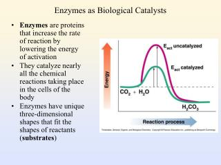 Enzymes as Biological Catalysts