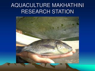 AQUACULTURE MAKHATHINI RESEARCH STATION