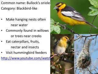 Common name: Bullock's oriole Category: Blackbird-like Make hanging nests often  near water