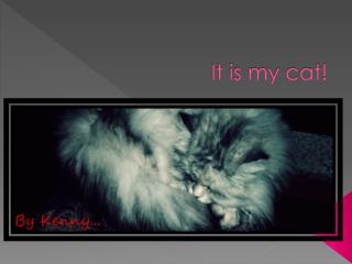 It is my cat!