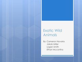 Exotic Wild Animals