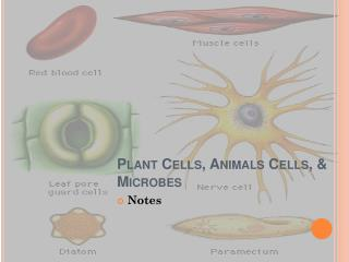 Plant Cells, Animals Cells, & Microbes