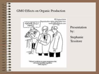 GMO Effects on Organic Production