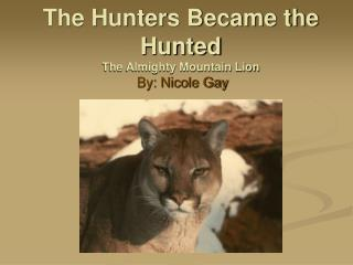 The Hunters Became the Hunted The Almighty Mountain Lion