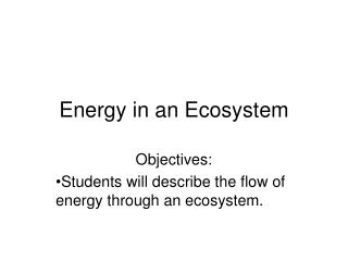 Energy in an Ecosystem