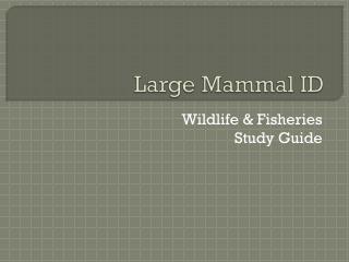 Large Mammal ID
