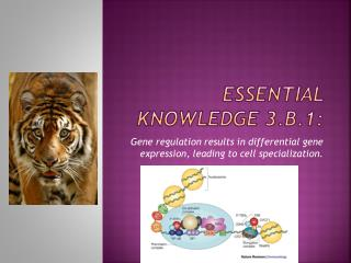 Essential knowledge 3.B.1: