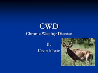CWD Chronic Wasting Disease