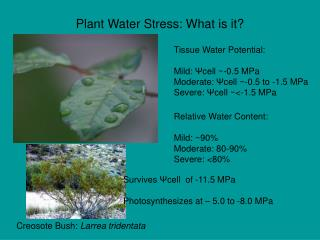 Plant Water Stress: What is it