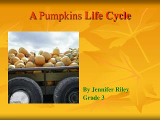 A Pumpkins Life Cycle
