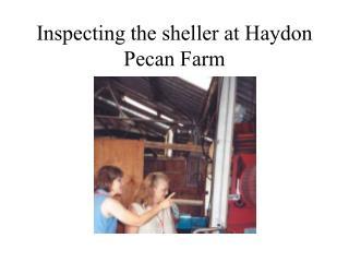 Inspecting the sheller at Haydon Pecan Farm