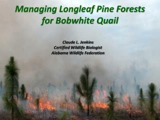 Managing Longleaf Pine Forests  for Bobwhite Quail