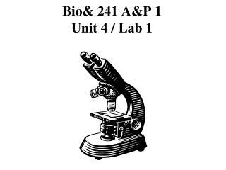 Bio& 241 A&P 1 Unit 4 / Lab 1