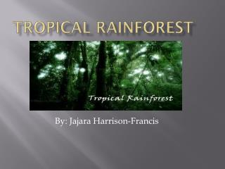 Tropical Rainforest