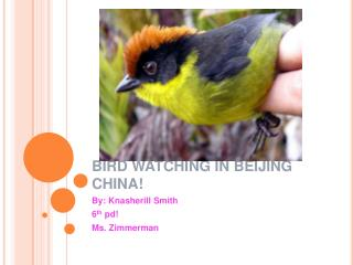 BIRD WATCHING IN BEIJING CHINA!