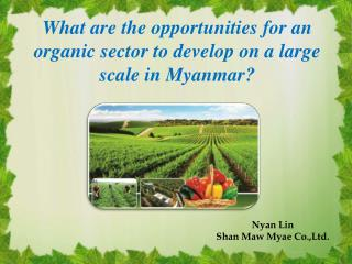 What are the opportunities  for  an organic sector to develop on a large scale in  M yanmar?