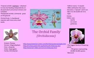 The Orchid Family (Orchidaceae)