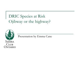 DRIC Species at Risk Ojibway or the highway?