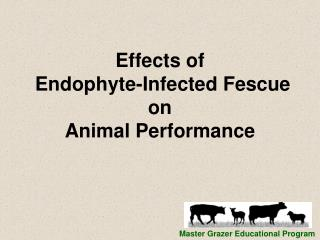 Effects of  Endophyte-Infected Fescue on  Animal Performance