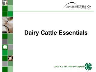 Dairy Cattle Essentials