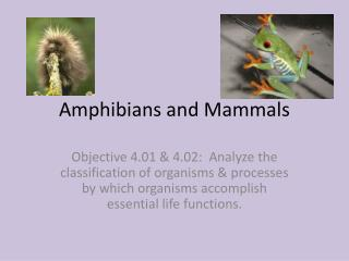 Amphibians and Mammals