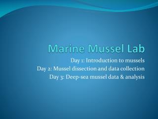 Marine Mussel Lab