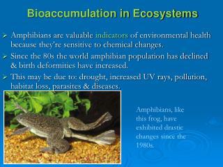 Bioaccumulation in Ecosystems