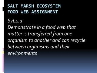 Salt Marsh Ecosystem Food Web Assignment