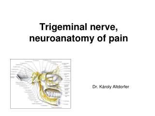 Trigeminal nerve, neuroanatomy of pain