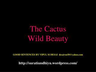 The Cactus Wild Beauty
