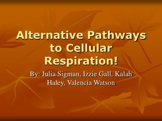Alternative Pathways to Cellular Respiration!
