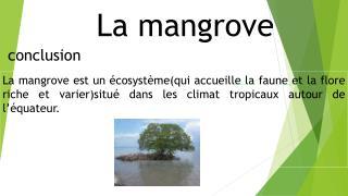 La mangrove conclusion