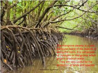 Mangrove  swamp  in  jarry
