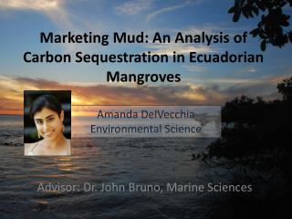 Marketing Mud: An Analysis of Carbon Sequestration in Ecuadorian Mangroves