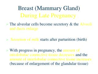 Breast (Mammary Gland) During Late Pregnancy