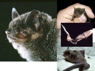 Missouri mammal identification