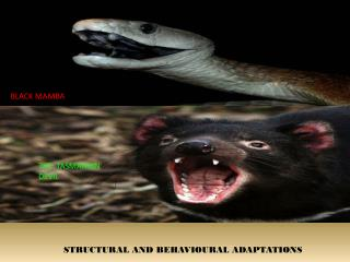 STRUCTURAL AND BEHAVIOURAL ADAPTATIONS