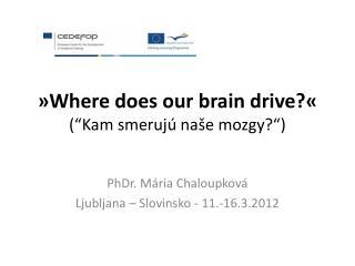 """» Where does our brain drive ?«  (""""Kam smerujú naše mozgy?"""")"""