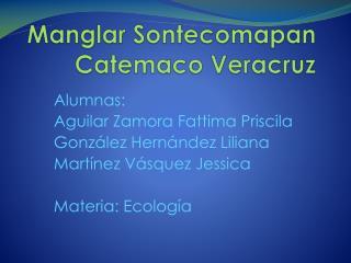 Manglar Sontecomapan Catemaco Veracruz