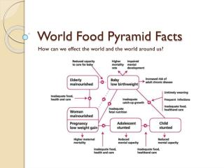World Food Pyramid Facts
