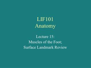 LIF101 Anatomy
